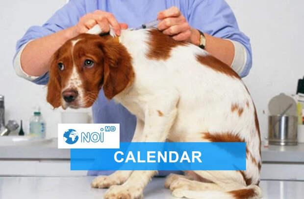 28 сентября 2021 года - какой сегодня праздник, события, именинники