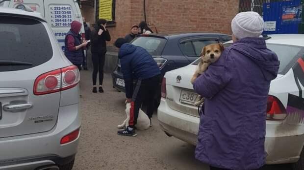 Число случаев бешенства резко выросло вРостовской области