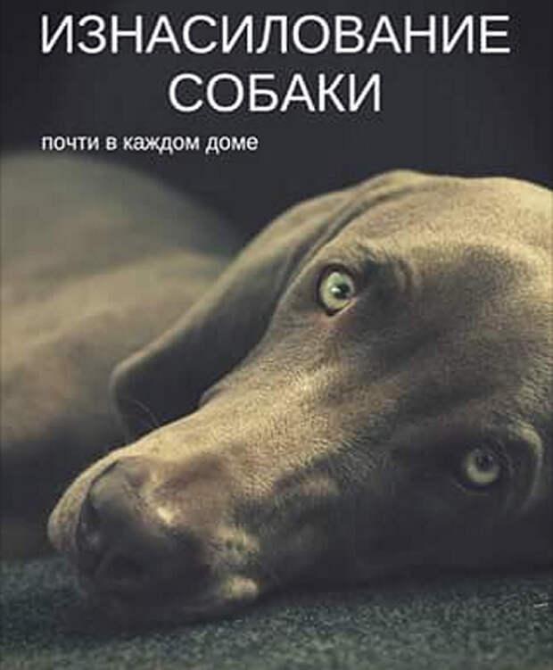 Собака. Личное пространство