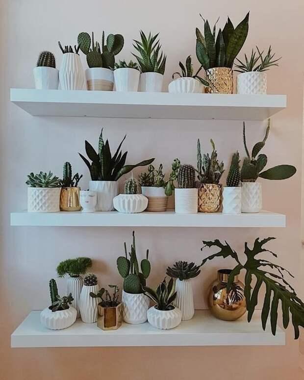 Поставить много небольших цветов на полках зеленый, лестницы, полки, растения, этажерки