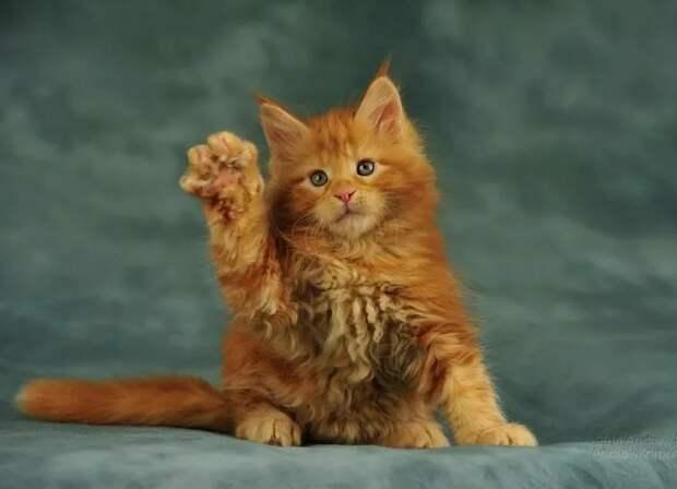 Ой, это же совсем другой котёнок, - растерялась Настя, - не тот, которого я выбрала