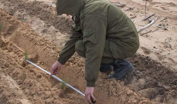 К посадке новых лесов приступили в Ростовской области