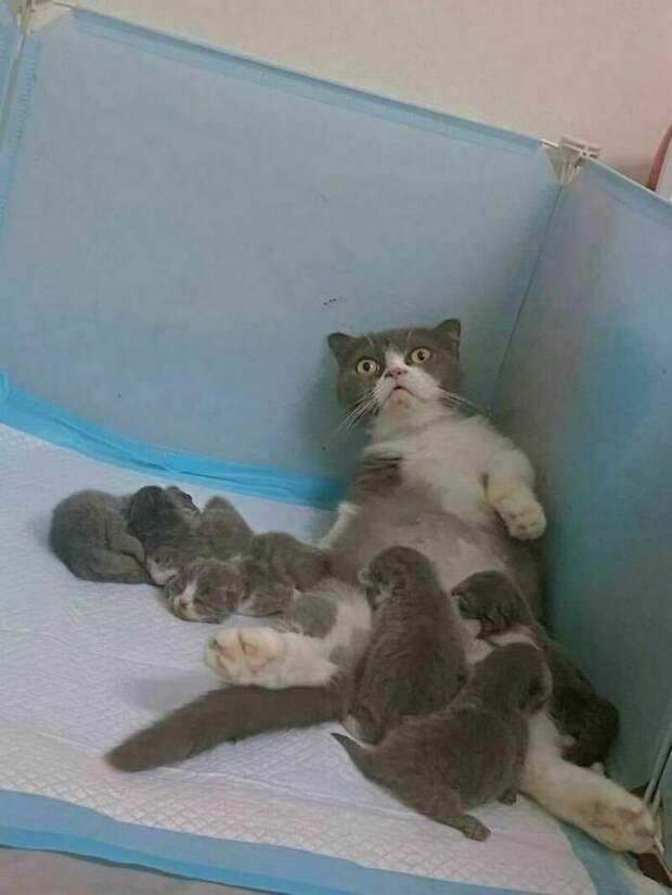 9 обаяшек-котиков, которые растопят сердце даже самого сурового хозяина