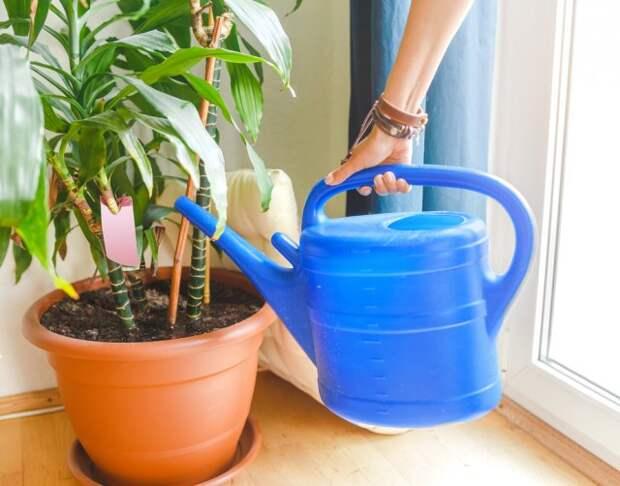 Полив растений зимой