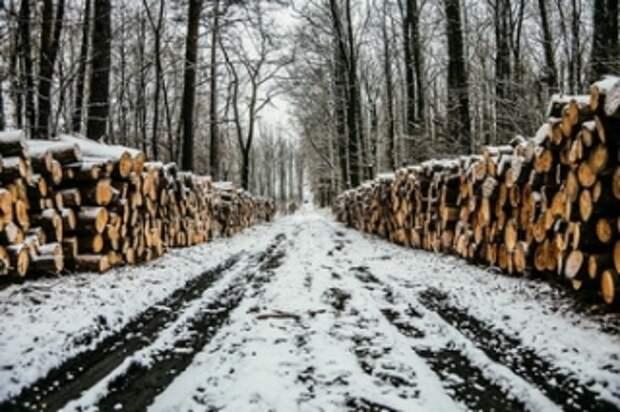 Черный лесоруб – это арендатор: в России уничтожен институт лесников
