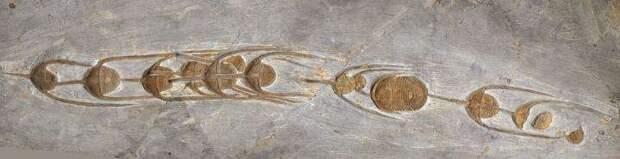 Следы возрастом 480 миллионов лет: ученые нашли отметины в камне