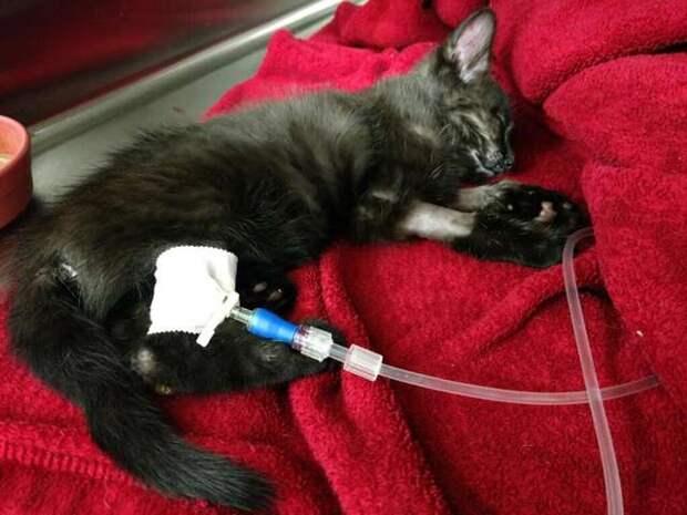 Спасение котенка, которого чуть живого выбросили в мусорном мешке