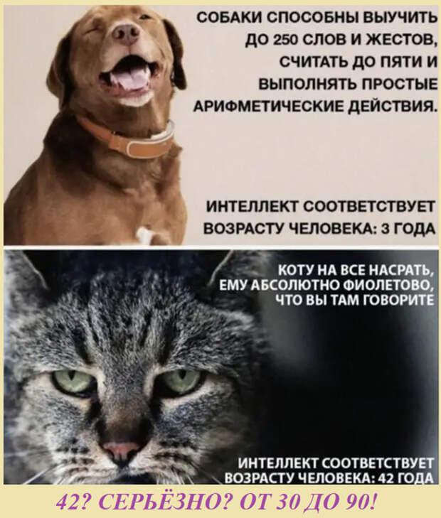 ВИннЕГРЕТ 174
