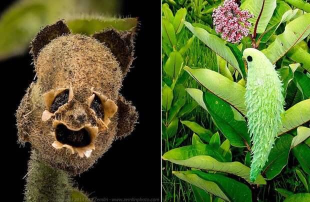 Поразительная парейдолия: 12 фото растений, похожих на что-то другое