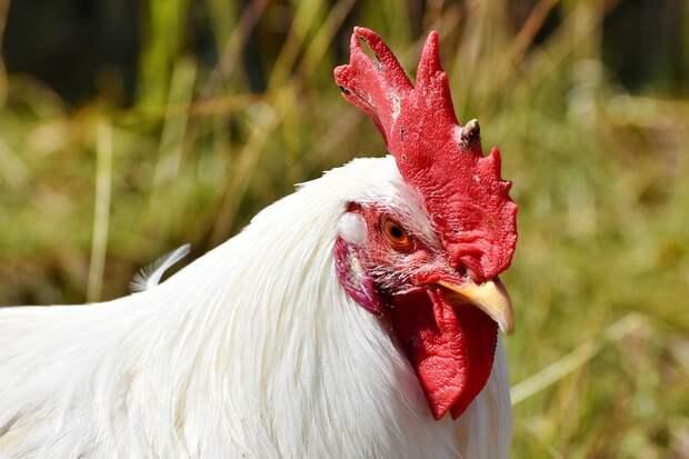 В Японии зафиксировали вспышку птичьего гриппа