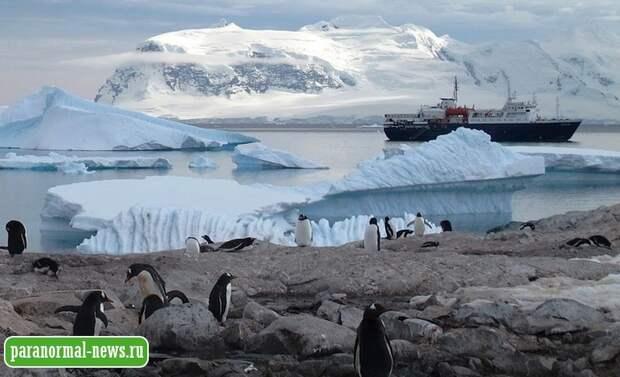 «Можно найти даже грибы»: Тайны ископаемого леса Антарктиды