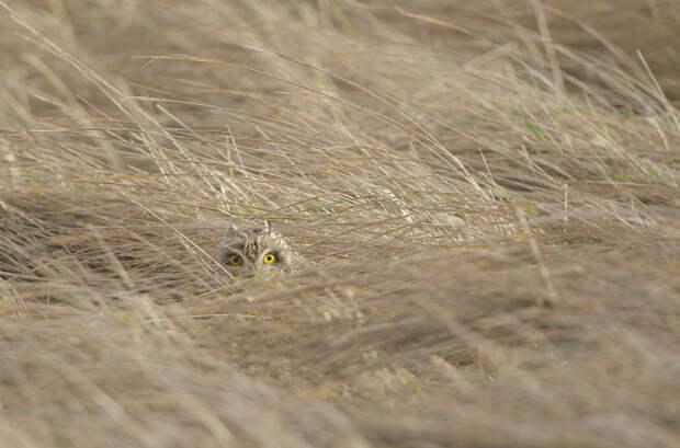 Животные, которые плохо спрятались