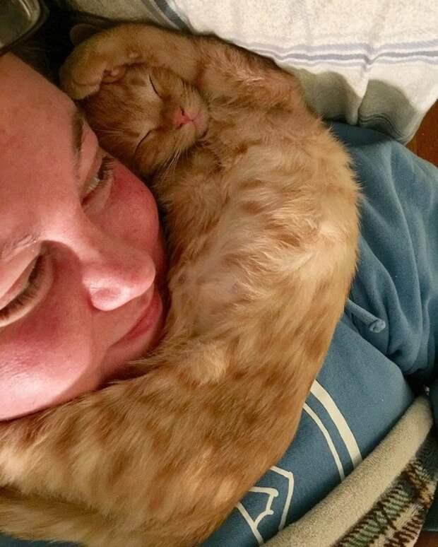 Котенок лег на шею