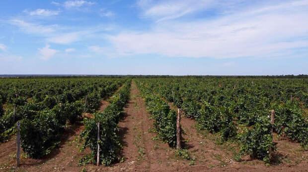 Ростовская область потеряла 1,7млрд рублей нааренде земли