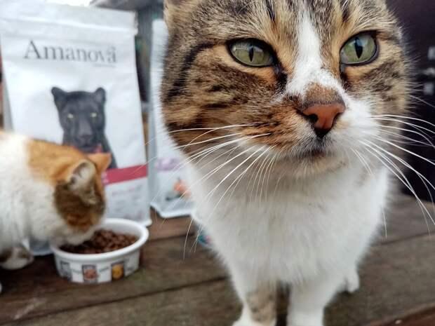 Кот не ест, пока ест кошка
