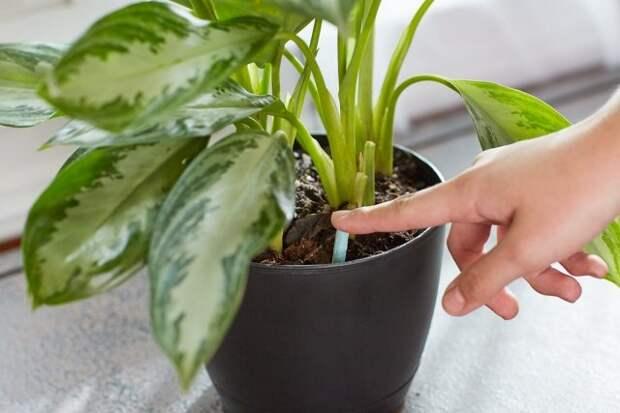 Подкормка растений зимой