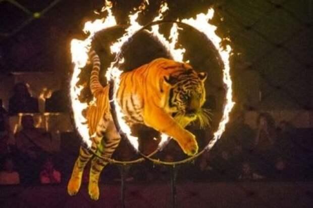 «Контактные зоопарки и использование животных в цирке»: в Украине усиливают права животных