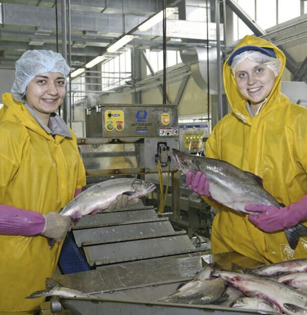 Отрасль рыбодобычи ждет интенсивное развитие