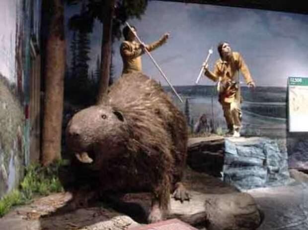 доисторический бобер