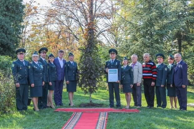 Севастопольские таможенники посадили дерево на Малаховом кургане (ФОТО)