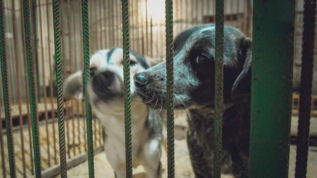 До4марта обещают отловить всех бездомных собак вЛевенцовке вРостове