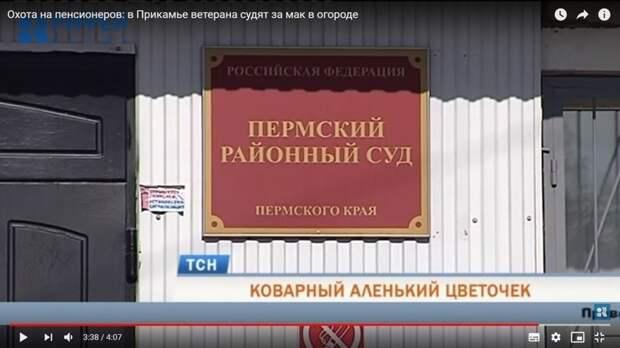 В Прикамье ветерана судят за мак в огороде ветера труда, видео, мак, суд