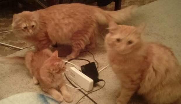 """Сначала Персик и Сырник… а потом """"дождь из котов""""! Несчастные котики преследуют добрую семью!"""