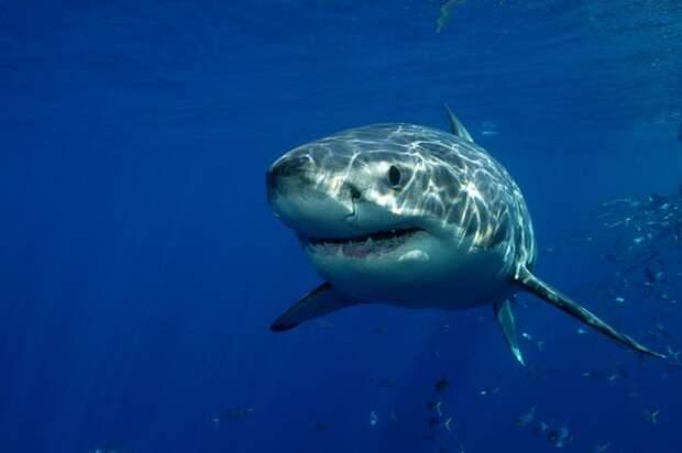 Акула попыталась съесть камеру