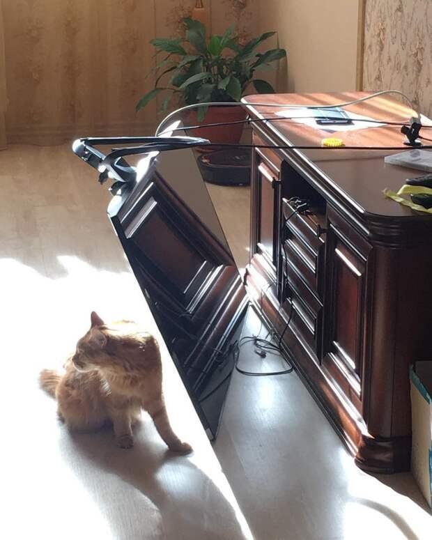 13. Кошка же тут совершенно не при чем, это очевидно накосячили, оно само, ошибка, смешно, фото, юмор, я не специально, я случайно