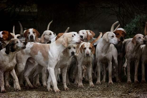 Губернатор Самарской области возмутился, узнав о разрешении на отстрел собак