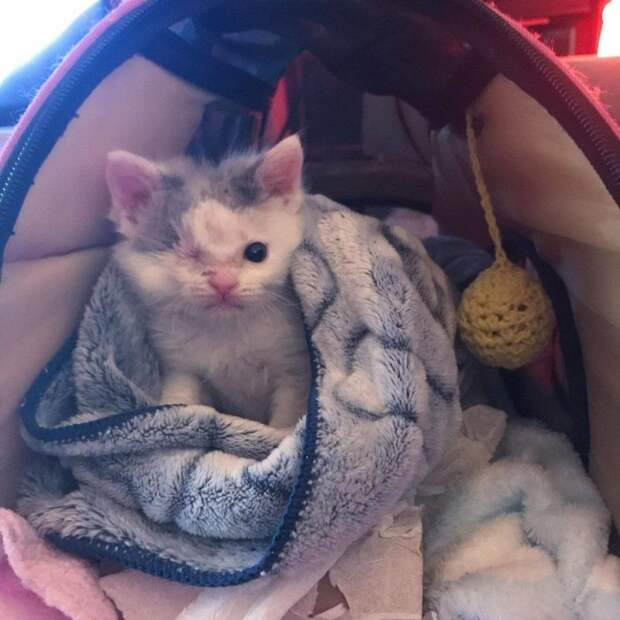 Прохожий заметил котенка, бродившего по улице с раненым глазом истории спасения, история спасения, коты, котята, кошки, помощь животным, спасение животных