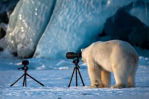 Объявлены победители самого веселого фотоконкурса Comedy Wildlife Photography Awards