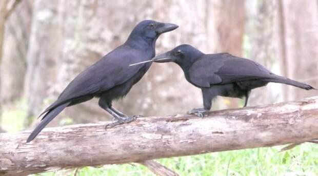 Продленная родительская опека помогает птицам стать умнее