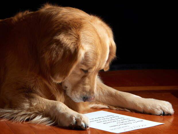 Собаки намного умнее, даже чем о них думают любители собак