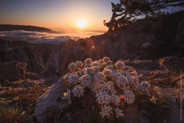 За границей облаков: гора Ай-Петри, Крым