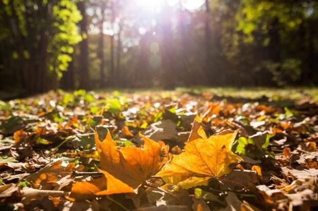 Со двора дома на Кашенкином Лугу вывезли мешки с листьями