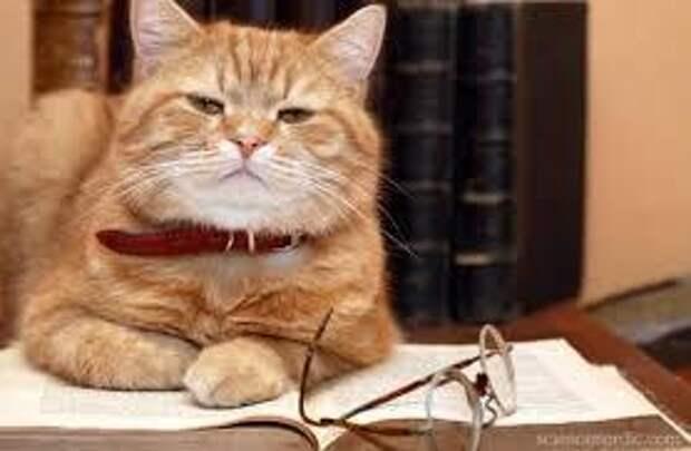 Кошки пришли на нашу планету с Сириуса и имеют геном пришельцев