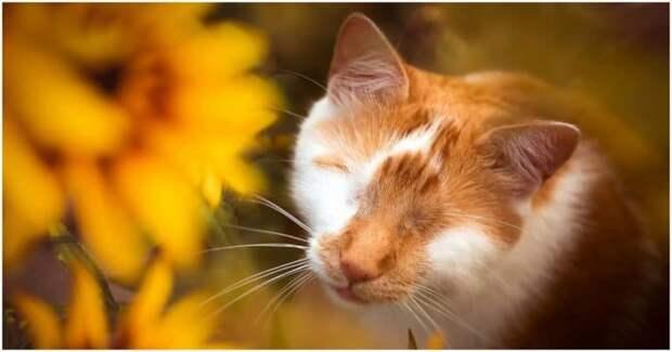 Слепой одноглазый кот воспринимает окружающий мир совсем не так, как здоровые его сородичи