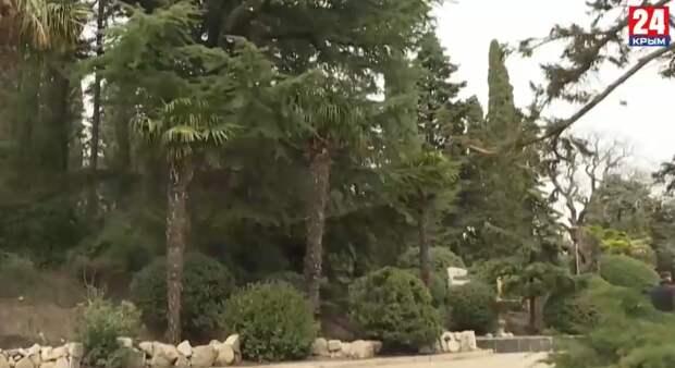 Вход в Форосский парк останется свободным