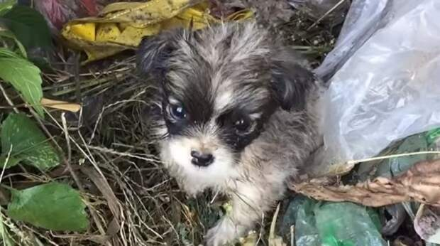 Живого щенка выбросили в мусор, а ведь он тоже хочет домой