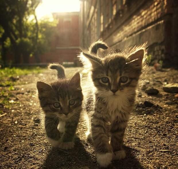 Фотографии милых и позитивных котиков