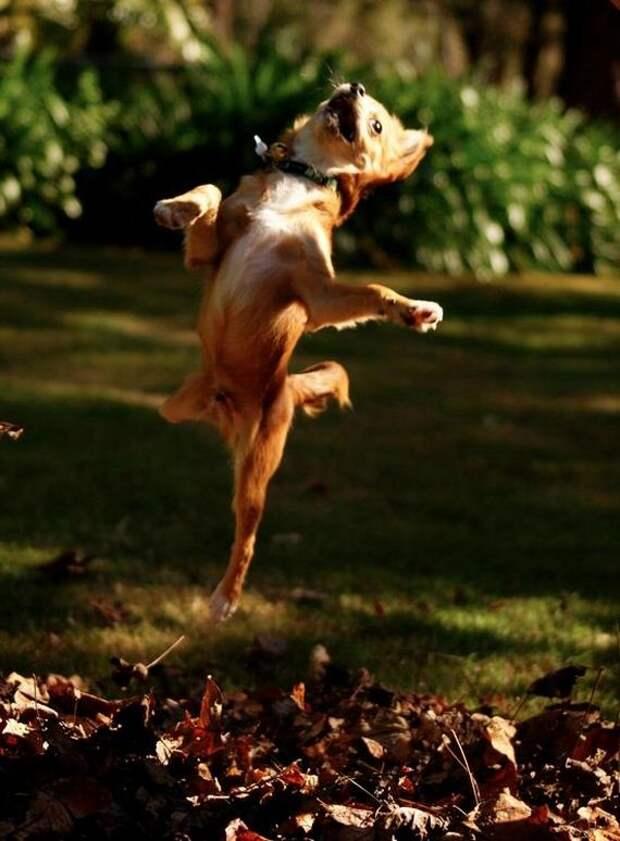 Смешные,неисправные, сумасшедшие, безумные, собаки, ведут себя странно