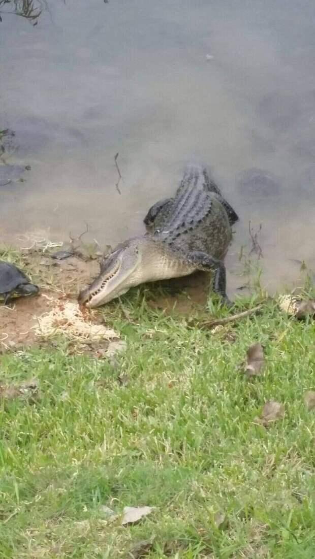 Странные исмешные фото измира дикой природы, которые вызывают много вопросов