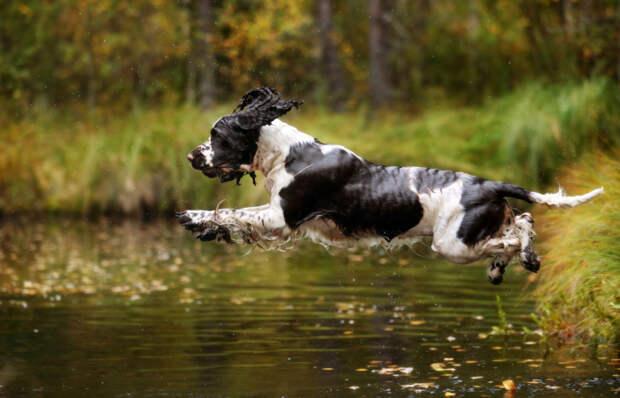Собачье счастье: Очаровательные и забавные псы на фотографиях Надежды Ивановой