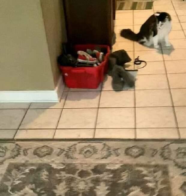«Кошка играет с тенью!»- спокойно думала хозяйка, пока не увидела, что «тень» от ботинка шевелится