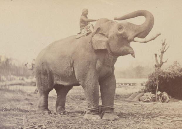 Albom fotografii indiiskoi arhitektury vzgliadov liudei 33