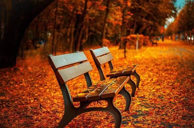 Осень. Фото: открытый источник