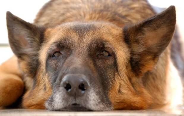 «Последняя собака» — очень трогательная история о человечности