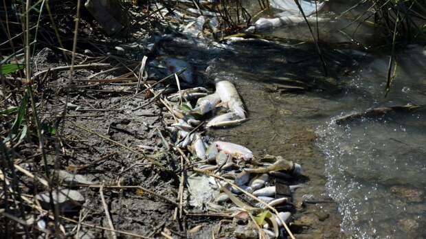 В гибели рыбы на Варваровском водохранилище обвинили фермера