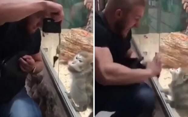 Мужчина разозлил обезьяну и доказал: первые 40 лет детства самые тяжелые